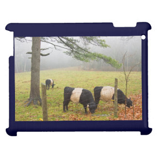 Belted Galloway Cows On Farm In Rockport Maine iPad Case