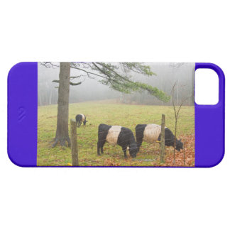 Belted Galloway Cows On Farm In Rockport Maine iPhone SE/5/5s Case