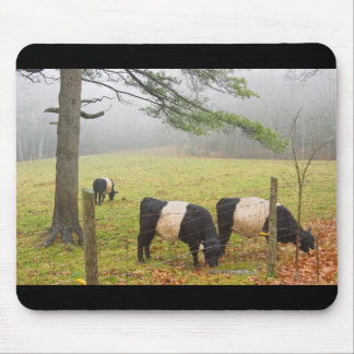 Belted Galloway Cows On Farm In Rockport Maine Mouse Pad