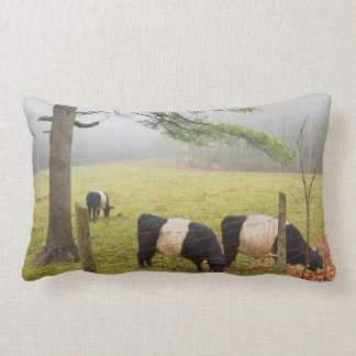 Belted Galloway Cows On Farm In Rockport Maine Throw Pillow