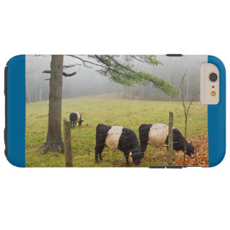 Belted Galloway Cows On Farm In Rockport Maine Tough iPhone 6 Plus Case
