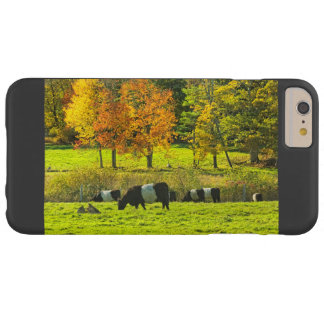 Belted Galloway Cows On Rockport Maine Farm Barely There iPhone 6 Plus Case
