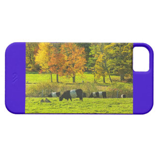 Belted Galloway Cows On Rockport Maine Farm iPhone SE/5/5s Case