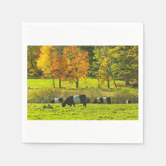 Belted Galloway Cows On Rockport Maine Farm Napkin