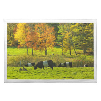 Belted Galloway Cows On Rockport Maine Farm Placemat