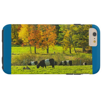 Belted Galloway Cows On Rockport Maine Farm Tough iPhone 6 Plus Case
