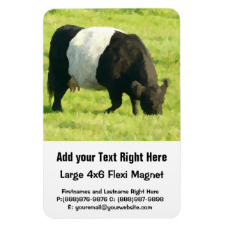 Belted Galloway on Green Pasture - Painted Style Magnet
