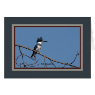 Belted_kingfisher_1935 Card