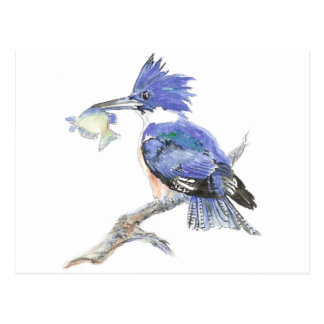 Belted Kingfisher, Bird, Nature, Wildlife, Postcard