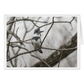 Belted Kingfisher Card