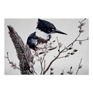 Belted kingfisher (female) posters