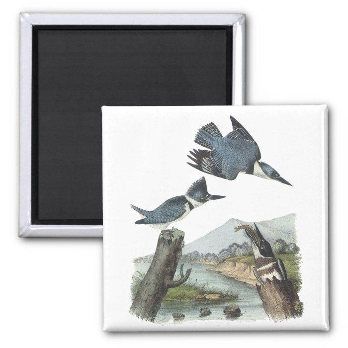 Belted Kingfisher, John Audubon 2 Inch Square Magnet