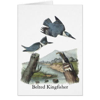 Belted Kingfisher, John Audubon Card
