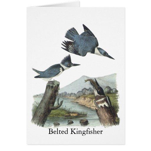 Belted Kingfisher, John Audubon Greeting Cards