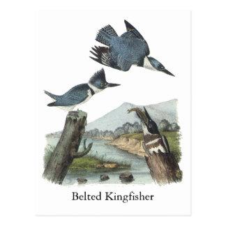 Belted Kingfisher, John Audubon Post Card