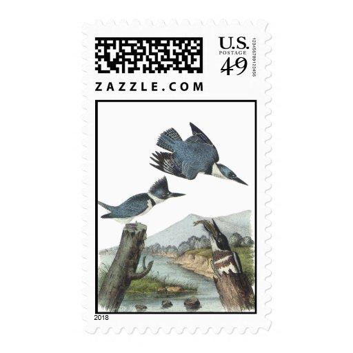 Belted Kingfisher, John Audubon Stamp