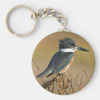 Belted Kingfisher Keychains