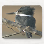 Belted Kingfisher Mouse Mats