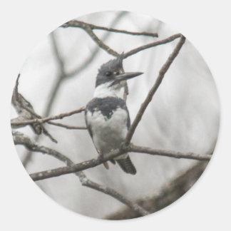 Belted Kingfisher Sticker
