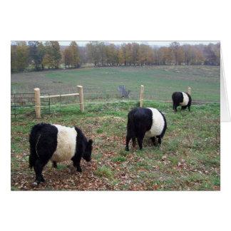 Beltie Cow Herd Along a Trail Greeting Card