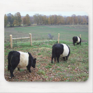 Beltie Cow Herd Along a Trail Mouse Pad