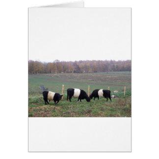 Beltie Cow Herd in Fall Card