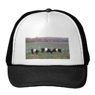 Beltie Cow Herd in Fall Trucker Hat