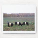 Beltie Cow Herd in Fall Mouse Pad