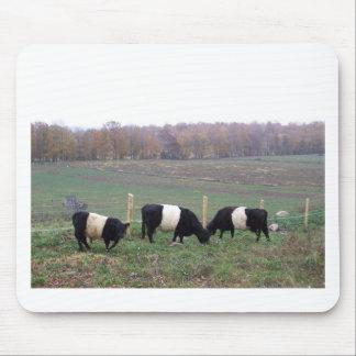 Beltie Cow Herd in Fall Mousepad