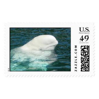 Beluga Postage Stamps