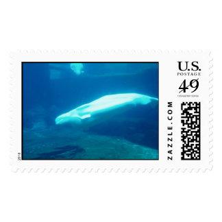 Beluga Stamp