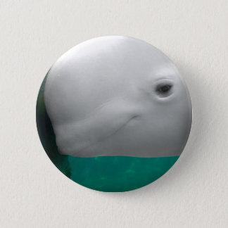 Beluga Watching Button