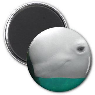 Beluga Watching Magnet
