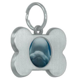beluga-whale-15.jpg placas mascota