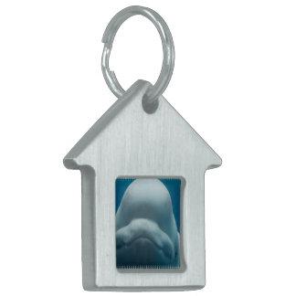 beluga-whale-15.jpg placas de nombre de mascota