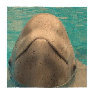 beluga-whale-1.jpg posavasos