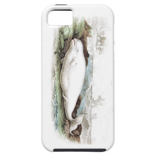 Beluga Whale #7 iPhone 5 Cover