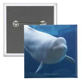 Beluga whale (Delphinapterus leucas) Buttons