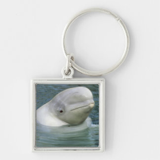 Beluga Whale, Delphinapterus leucas), Captive Silver-Colored Square Keychain