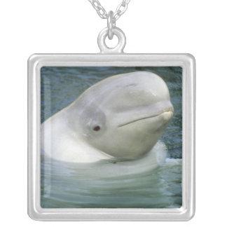 Beluga Whale, Delphinapterus leucas), Captive Square Pendant Necklace
