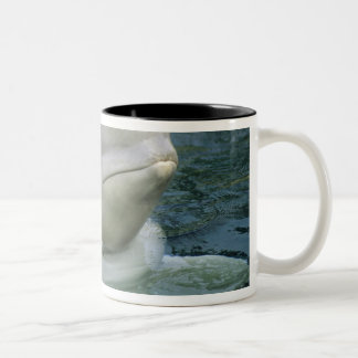 Beluga Whale, Delphinapterus leucas), Captive Two-Tone Coffee Mug