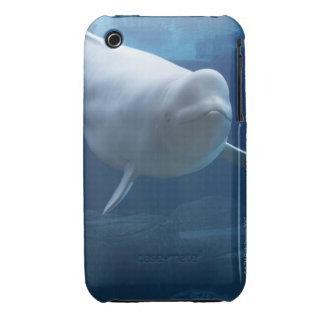 Beluga whale (Delphinapterus leucas) iPhone 3 Case-Mate Cases
