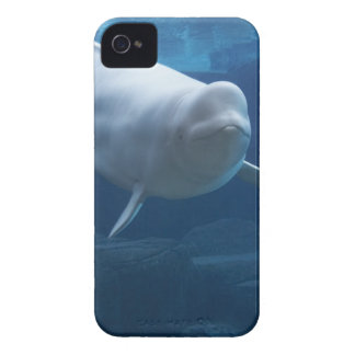 Beluga whale (Delphinapterus leucas) iPhone 4 Case-Mate Case