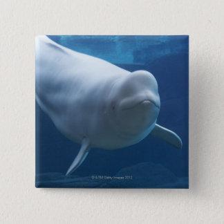 Beluga whale (Delphinapterus leucas) Pinback Button