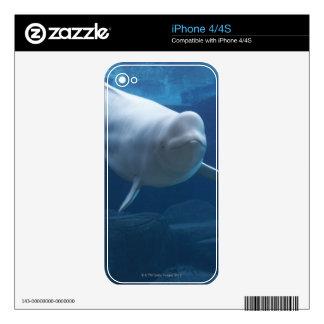 Beluga whale (Delphinapterus leucas) Skin For The iPhone 4