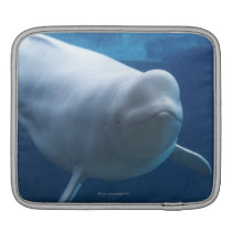 Beluga whale (Delphinapterus leucas) Sleeve For iPads