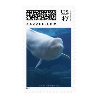 Beluga whale (Delphinapterus leucas) Stamp