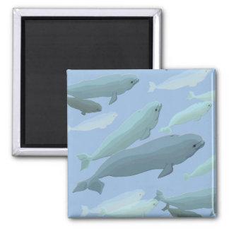 Beluga Whale Fridge Magnet Whale Art Gifts
