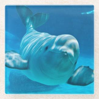 Beluga Whale Glass Coaster