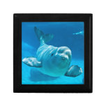 Beluga Whale Jewelry Boxes